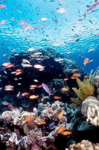 澳洲大堡礁.bmp