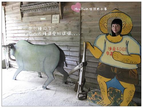 東勢賞桐花 (8).jpg