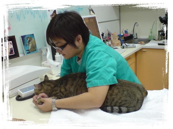 20090529貓醫院遇到巨貓 (4).JPG