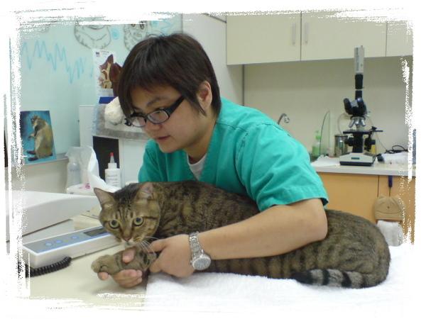 20090529貓醫院遇到巨貓 (5).JPG