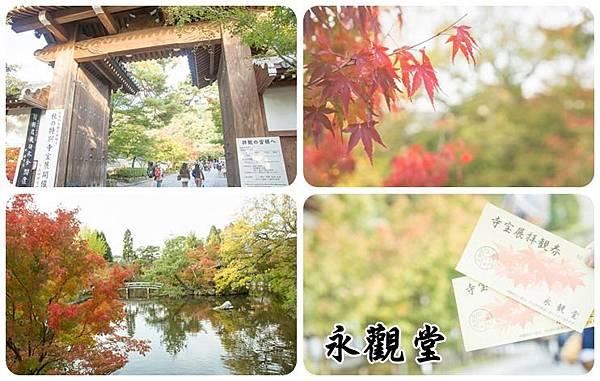 京都永觀堂楓葉