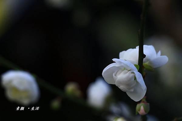 _MG_3302