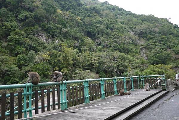 2猴.jpg