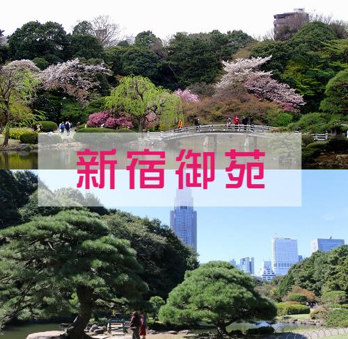 新宿御院.jpg