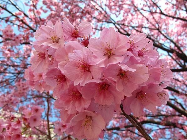 tokyo-841814_960_720.jpg