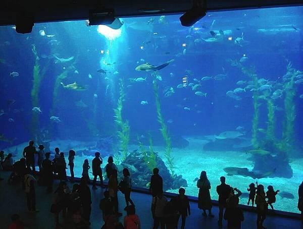 Aqua Planet海洋世界.jpg