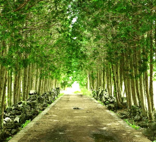 森林小徑.jpg