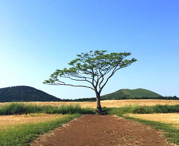 孤立樹.jpg