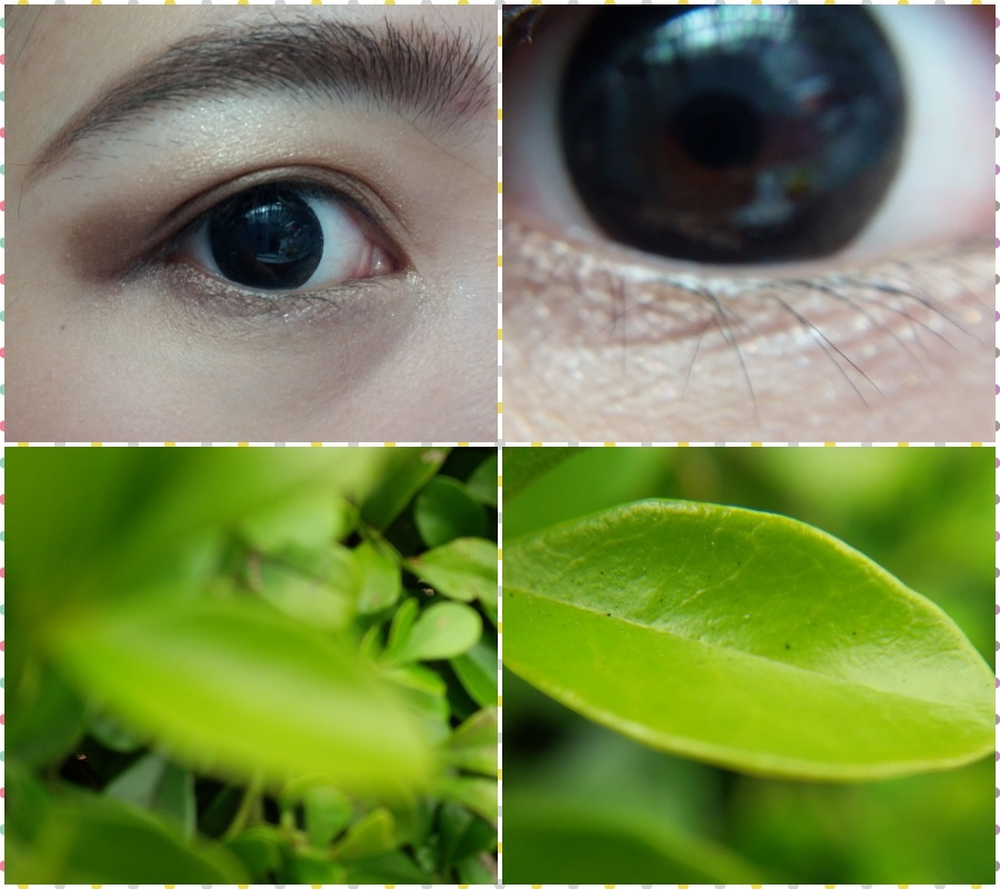 collage-微距1.jpg