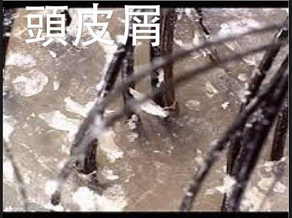 小羽:今日文需要照片_170815_0001.jpg