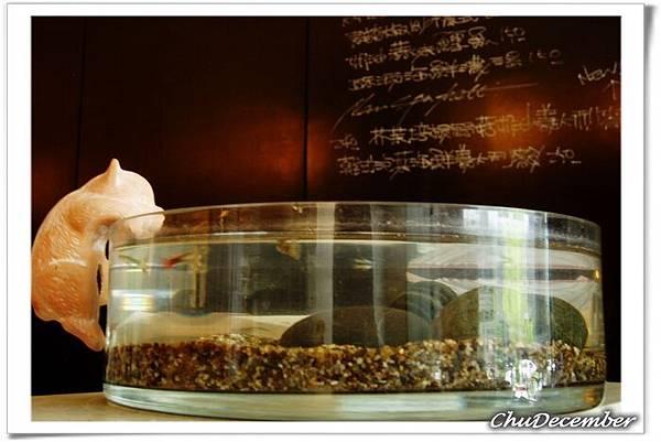 小魚缸與喵