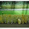 穀倉內的小活動--種蹈許願卡