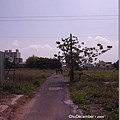 前往眷村的荒蕪小路