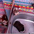 色彩陪伴的水槽