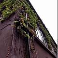 藤蔓爬滿牆