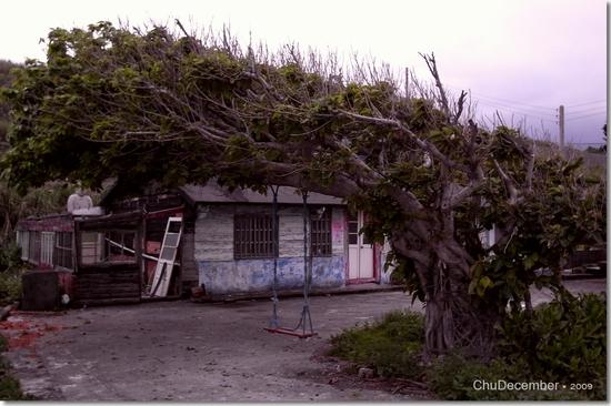 神奇的樹與鞦韆