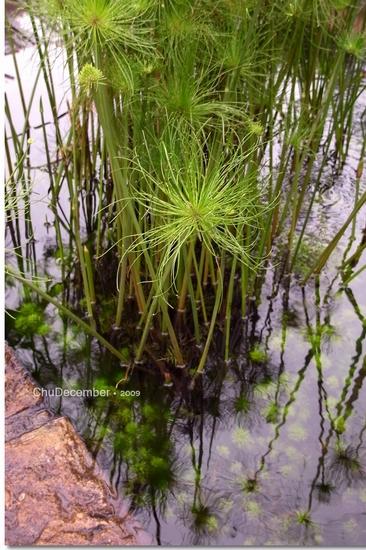 奇怪的水生植物