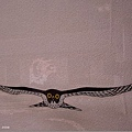 有特別意義的鷹?
