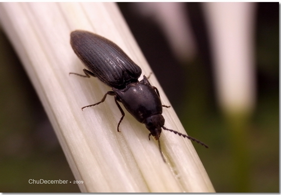 意外發現的小甲蟲