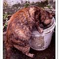 愛玩水的小喵