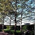 在樹下曬曬陽光看看出真不賴