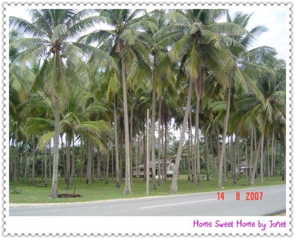 1408 coconut kt.jpg
