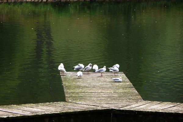 9-4鴨子,水有點冷了?.jpg