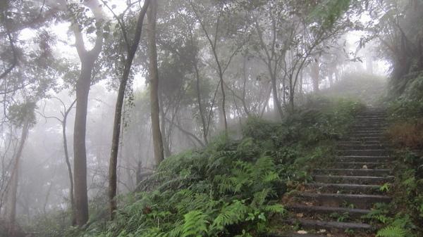 霧中的大桶山.jpg