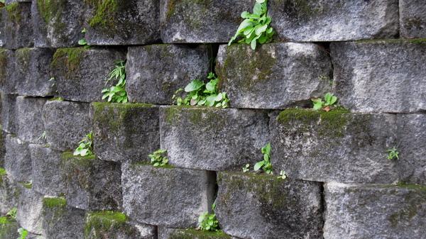 石頭與青草.jpg