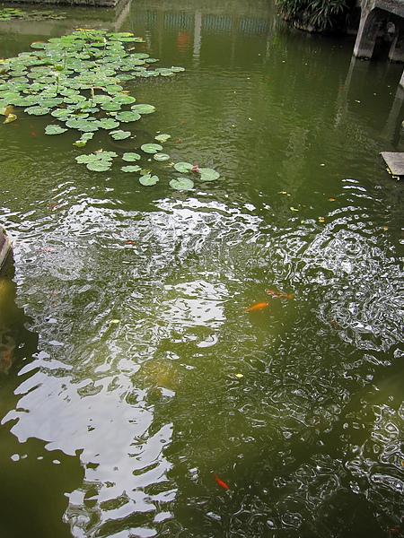 水塘.jpg