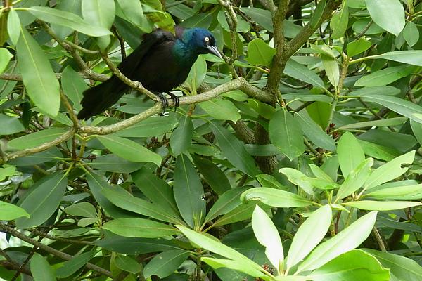 藍色鳥.jpg