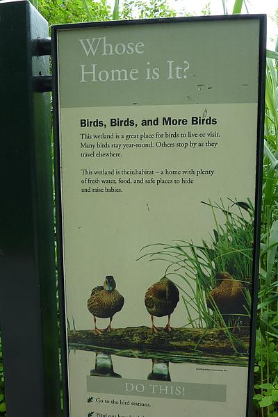 小鳥的家.jpg