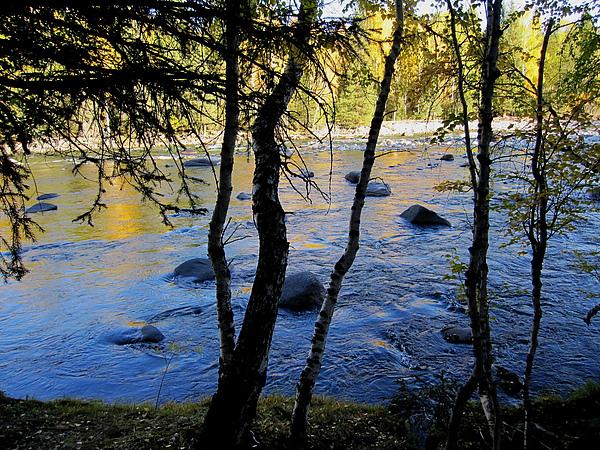 泛著金光的禾木河.jpg