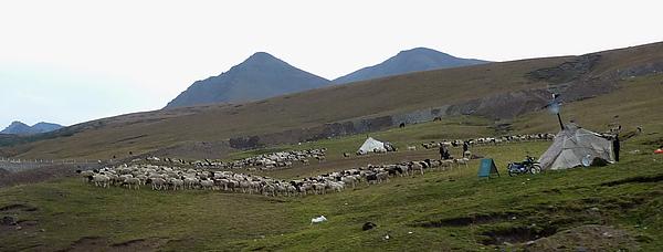 牛群與天山.jpg