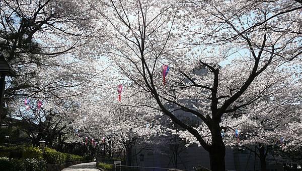 飛鳥山公園裡好多櫻花喔~~~ @o@