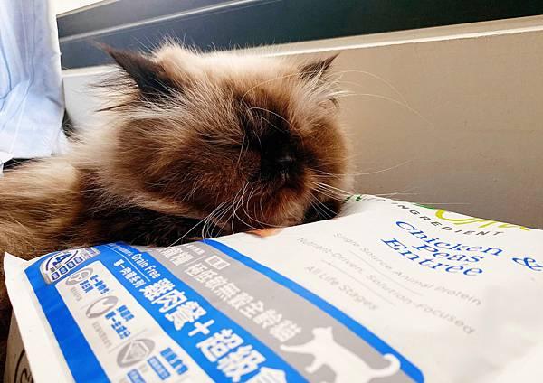 Cat_201208_3.jpg