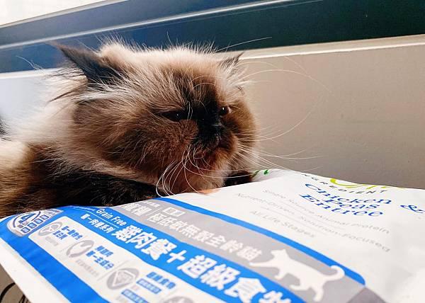 Cat_201208_4.jpg