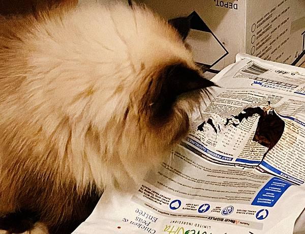 Cat_201208_2.jpg