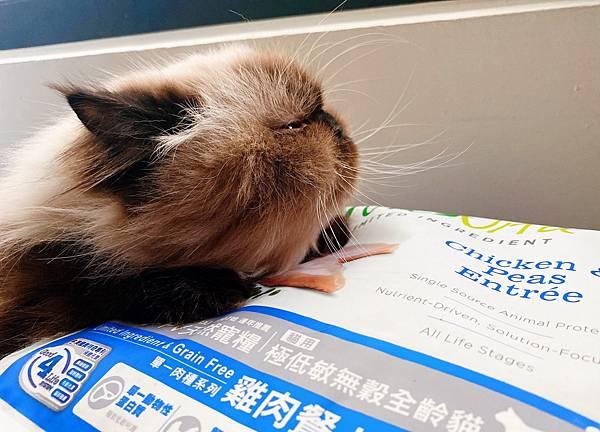 Cat_201208_5.jpg