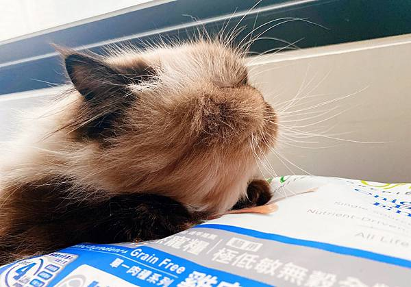 Cat_201208_6.jpg