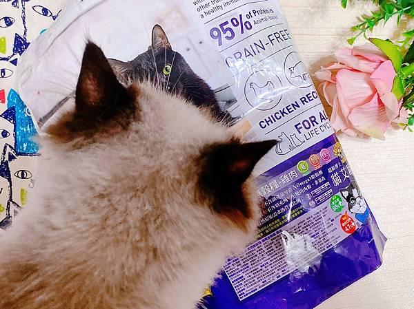 寵物試用_210718_39.jpg