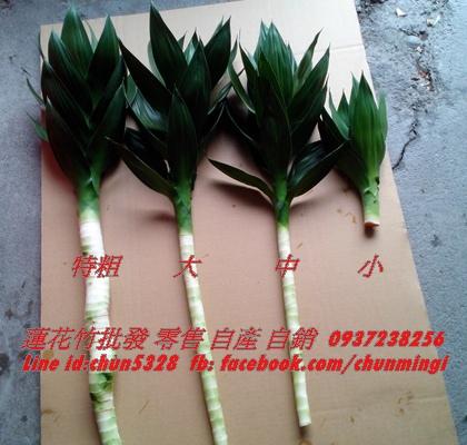 蓮花竹規格