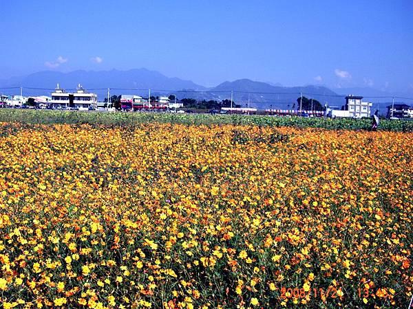 2008新社花海