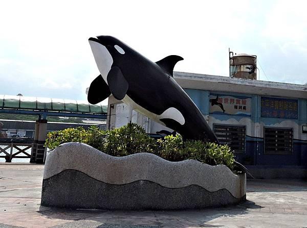 花蓮港賞海豚