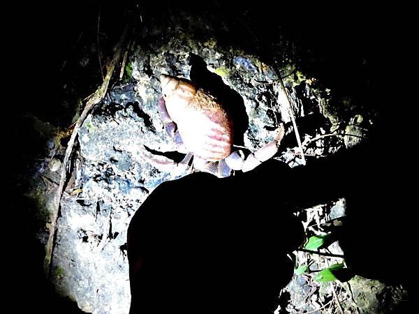 美人洞夜遊/陸蟹
