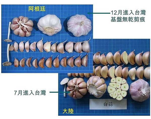 分辨中國的蒜頭和台灣蒜頭.jpg