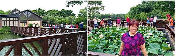 P01.jpg桃園八德埤塘生態公園