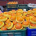 20181126合歡山翠峰休息站/高山甜柿