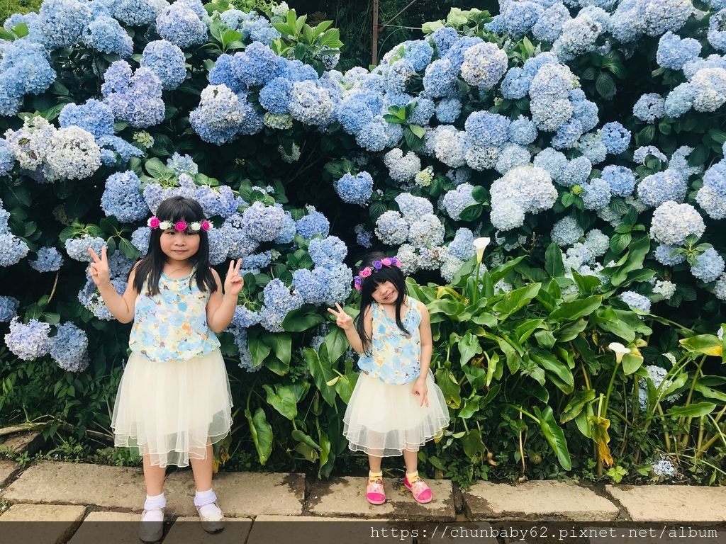 chunbaby62花與樹繡球花25.JPG