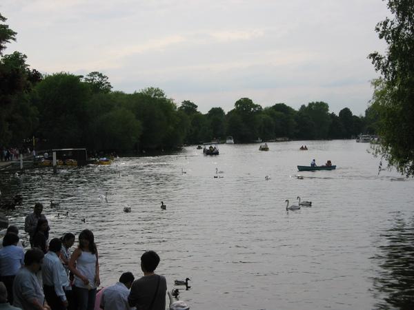 Thames river in Windsor